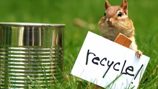 15 Tips for Eco-Friendly Pet Ownership