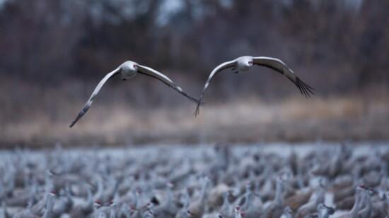 80,000 Cranes & You