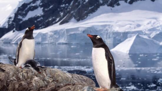 A Rare Antarctic-solar eclipse of the sun adventure awaits..