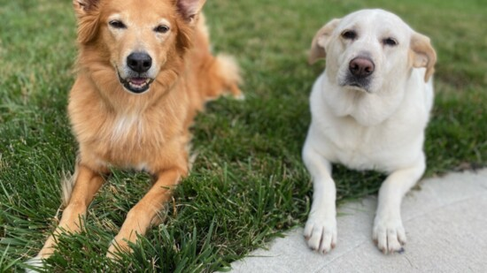 Animal Assisted Therapy and Kids