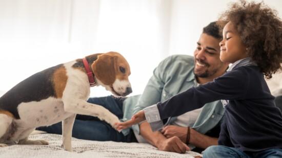 Are you a Pet Parent?
