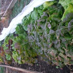 fall-harvest2012-010-300?v=2
