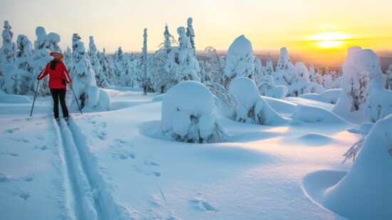 Beginner's Guide to Cross Country Skiing