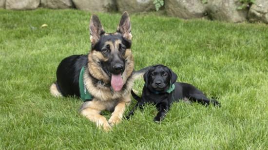 Caring Eyes Puppy Raising Club