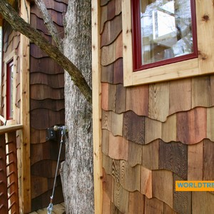 201804-world-treehouse-asheville-downtown-outside-tree-and-treehouse-300?v=1