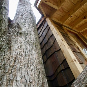 201804-world-treehouse-asheville-downtown-tree-and-treehouse-300?v=1