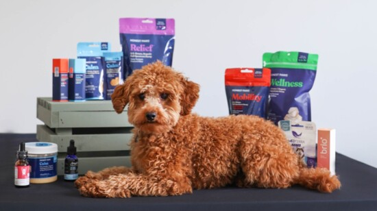 CBD PLUS- Relief for You & Your Pets