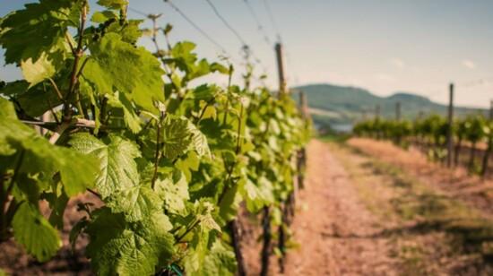 Colorado Wine Lovers Explore