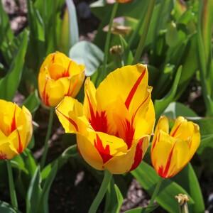 flowers%20at%20blue%20heron-300?v=1
