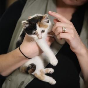 20190115-cat%20brew-6653-300?v=1