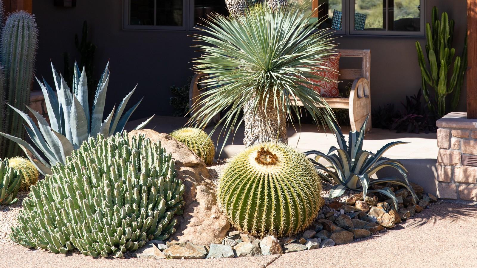 Desert Foothills Landscape Shares Eco Friendly Outdoor Inspirations