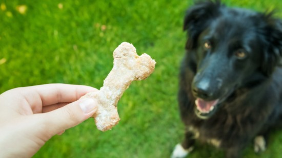 Dog Biscuits Made Easy!