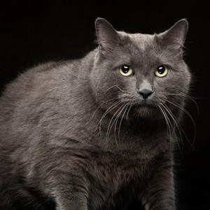 jmillstein-cat-gray-10-edit-300?v=2