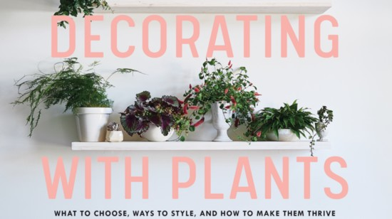 cover%20decorating%20with%20plants-550?v=4
