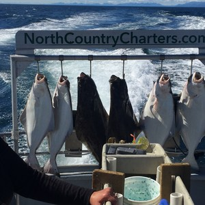 halibut%20haul-300?v=2