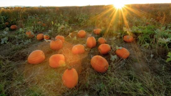 Fall Harvest in Idaho