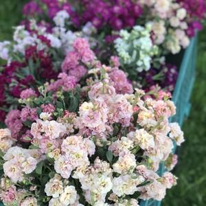 cart%20of%20of%20fresh%20flowers-300?v=1