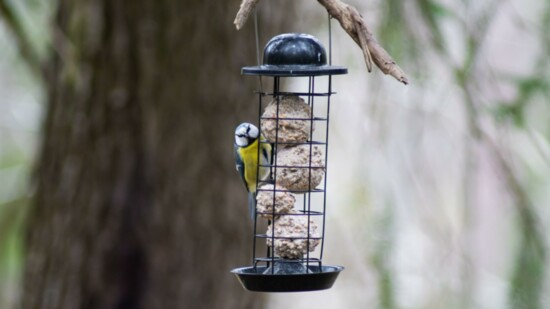 For the Birds in your Garden