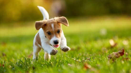 Fun Tricks To Teach Your Puppy