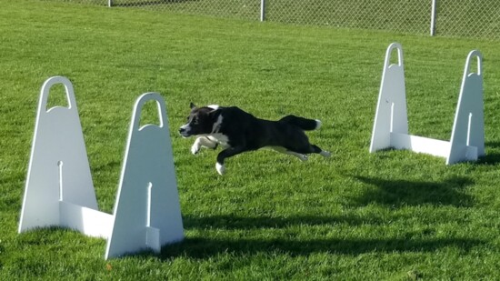 Fun with FlyDogs
