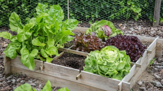 Geek Out on Gardening