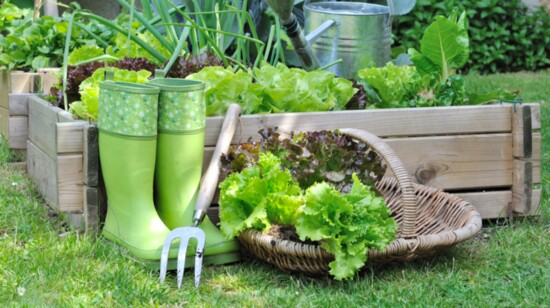 Container Gardens: Growing Food in Small Spaces
