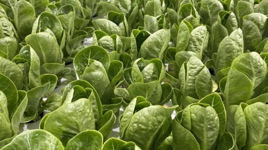 Growing Green Indoors