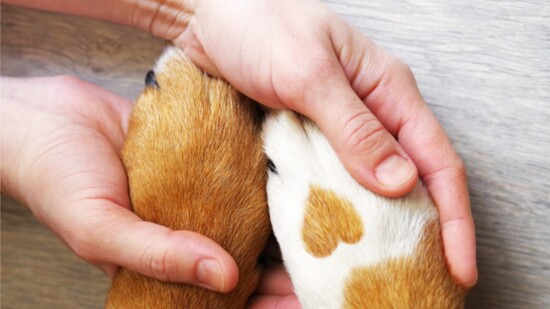 Healing Products For Your Pets