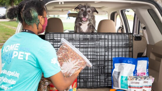Three Ways to Help Homeless Animals