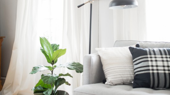 Houseplants and Your Health
