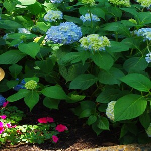 mp_blue%20flowers_crop%20hori-300?v=1