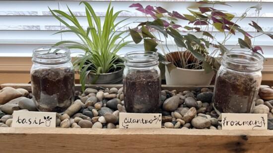 How to Create a Mason Jar Herb Garden