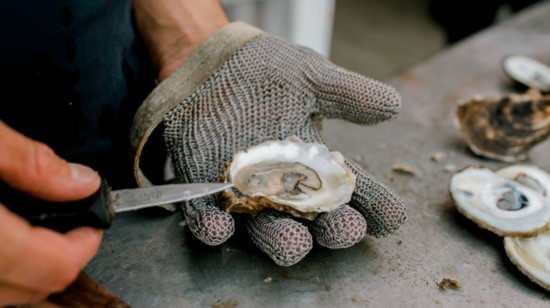 The Local Universal Oyster