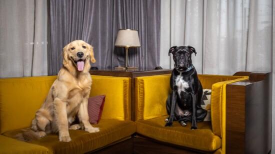 Jack and Duke's Review of Nashville Dog-Friendly Hotels