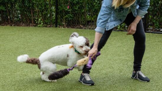 Kathy Santo Dog Training