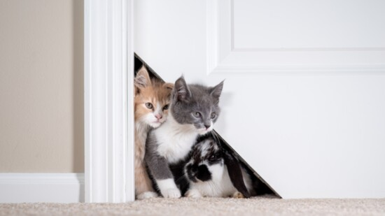 Kitty Korner Door