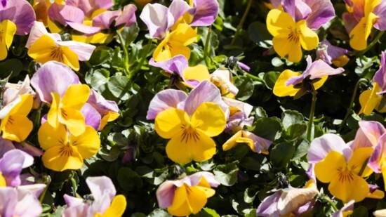Kristin Dahl's Spring & Summer Must-Haves