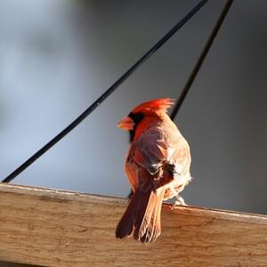 birds_toc-300?v=1