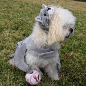 rally%20squirrel%20at%20chesterfield%20dog%20park-300?v=1