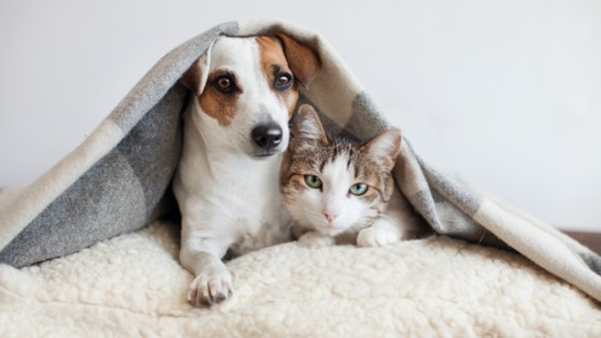 Understanding and Loving Your Pet