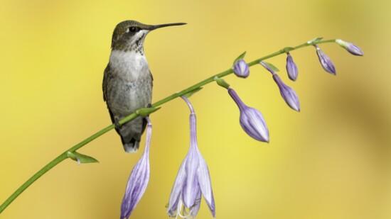 Mike Lentz Nature Photography