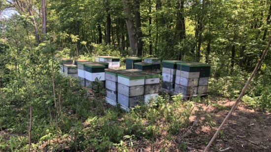 New England Apiaries and Billy C's Honey