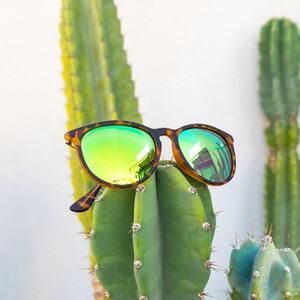 drew-trtgrn-cactus-300?v=1