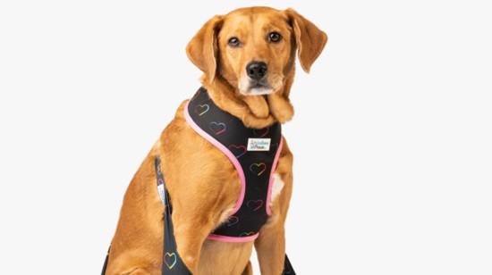 Perfect Pet Accessories