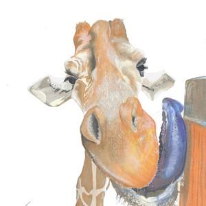giraffe-300?v=1