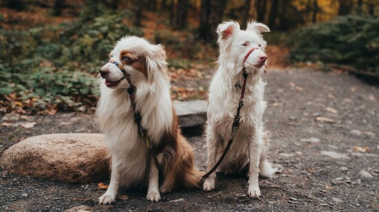 Pet Wellness