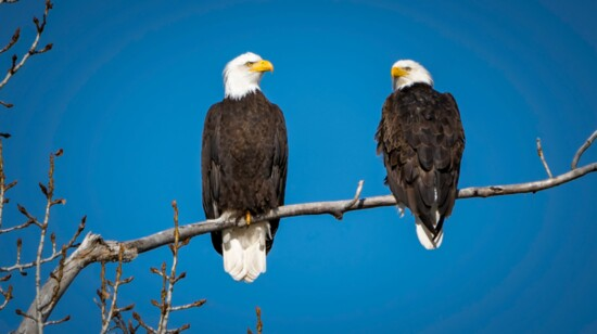 EAGLE'S APPEAL:  RURAL & URBAN