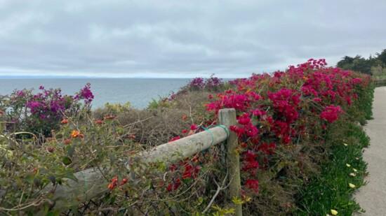 "Exploring Santa Barbara, the ""American Riviera"""