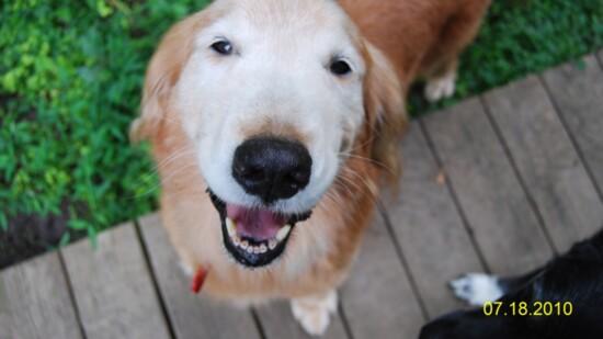 Senior Dogs Find Forever
