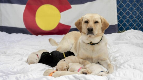 Service Dogs Transforming Lives